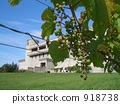 Grapes and wine castle 918738