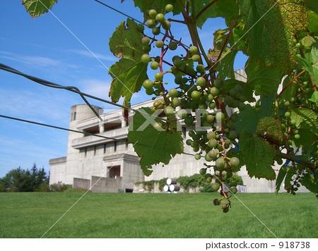 포도와 와인 성 918738