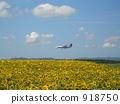 Sunflower Airport 918750