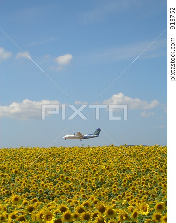 Sunflower Airport 918752