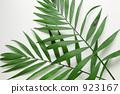 Palm leaves 923167