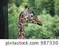 長頸鹿 高知縣 動物園 987336