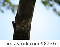 매미, 고치, 나무 987361