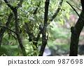 樹木 啄木鳥 野生鳥類 987698