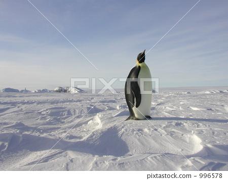 Emperor Penguin 996578