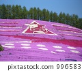 Shiba cherry tree earthenware 996583
