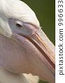 beak, beaks, pelican 996633