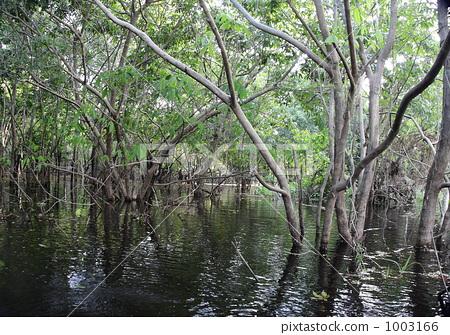 아마존의 수몰 숲 1003166