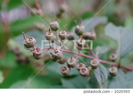 속이 빈 나무의 열매 1020593
