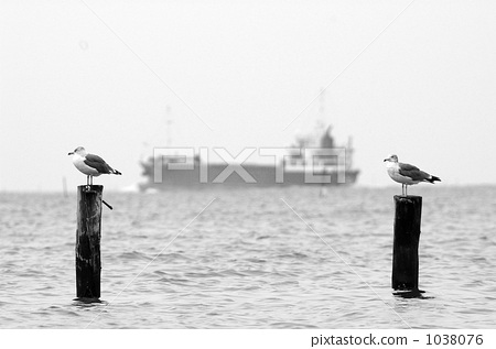 black and white, monochrome, gull 1038076