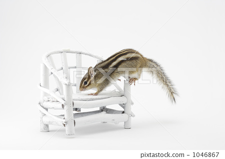 Squirrels and chairs 1046867