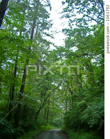 forest, wood, avenues 1061762