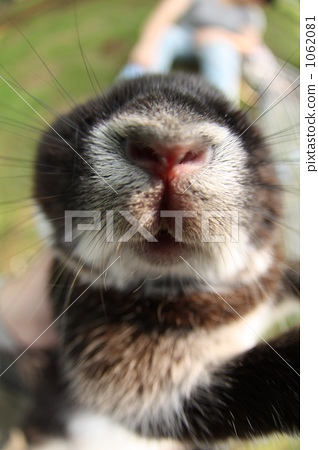 rodent, small animal, bunny 1062081