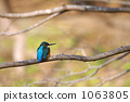 kingfisher, branch, small bird 1063805