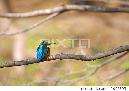 kingfisher, branch, small bird 1063805