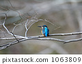 kingfisher, wild bird, overcast 1063809