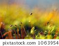 moss, autumn, autumnal 1063954