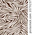 vector, vectors, zebra 1079237