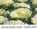 Habotan white 1086395