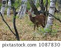 deer, deers, animal 1087830