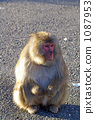 monkey, monkeys, land mammals 1087953