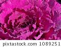 ฮาบูตันสีม่วง 1089251