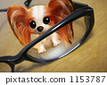 Papillon glasses 1153787