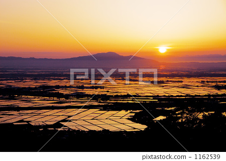Sunset and paddy field 1162539