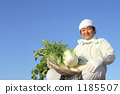 Winter vegetables and middle-aged farmers 1185507