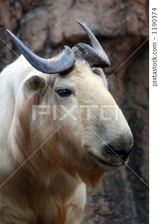 한 마리, 1마리, 초식 동물 1190374