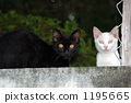 Two cats 1195665