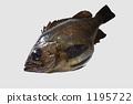 Spring fish 1195722