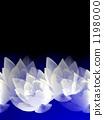 睡莲 莲花 花朵 1198000