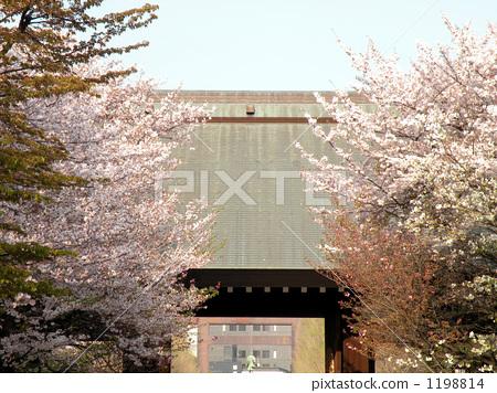 Cherry blossoms in Yasukuni 1198814