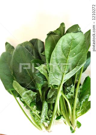 Spinach 1210272