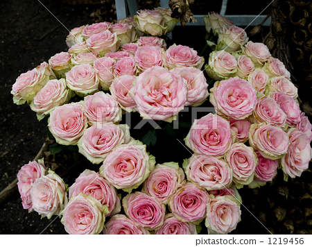 Bouquet of roses with beautiful pink and white gradation 1219456