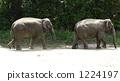 ผู้ปกครองช้างและเด็ก 1224197