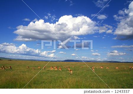 Flock of Impala 1243337