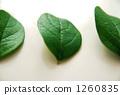 잎 2 1260835