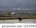 시골 풍경 모내기 1263984