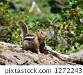 Squirrel in Yosemite National Park 1272243