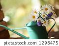 Spring Margaret 1298475