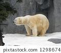Polar bears 1298674