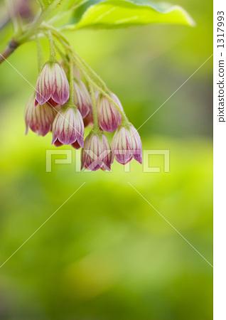 등대 꽃 1317993