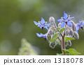 Polji flowers 1318078
