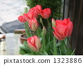 tulipa, bloom, blossom 1323886