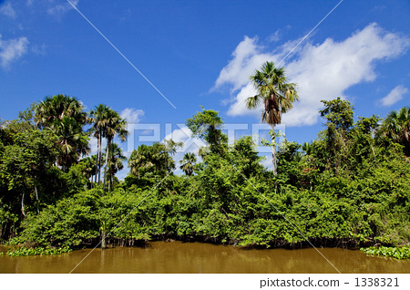 Barzere flooded forest in the Amazon River 1338321