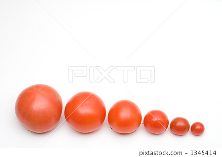 A row of tomatoes 1345414