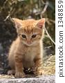 차 호랑이 고양이 1348859