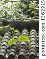 잎, 이파리, 잎사귀 1362915